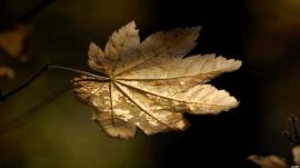Autumns Light