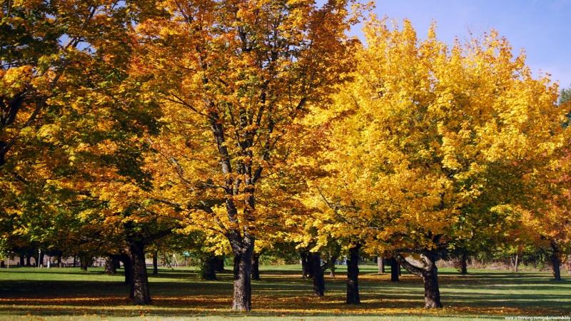 Autumns Palette