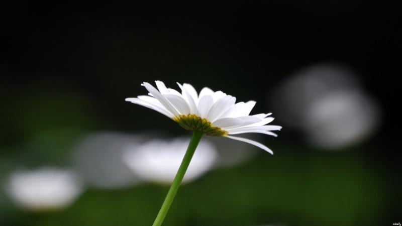 Singular Beauty