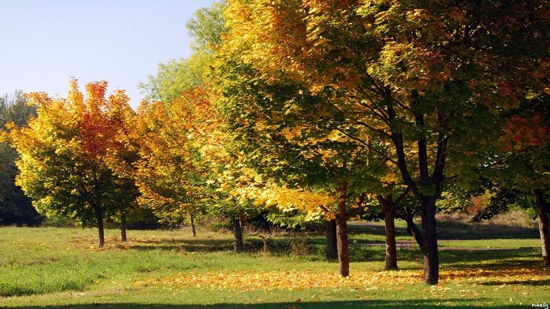 Autumns Palette 2