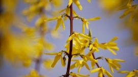 Mellowed Yellow 2