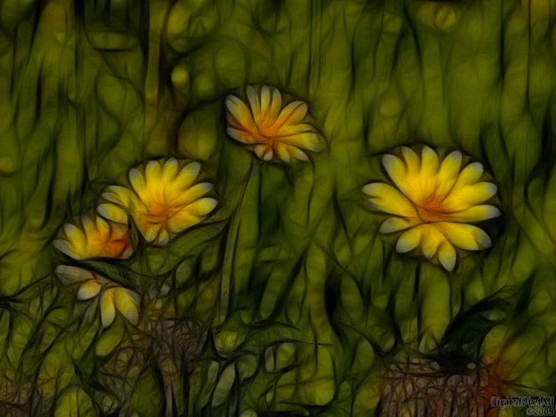 Stained Daisies