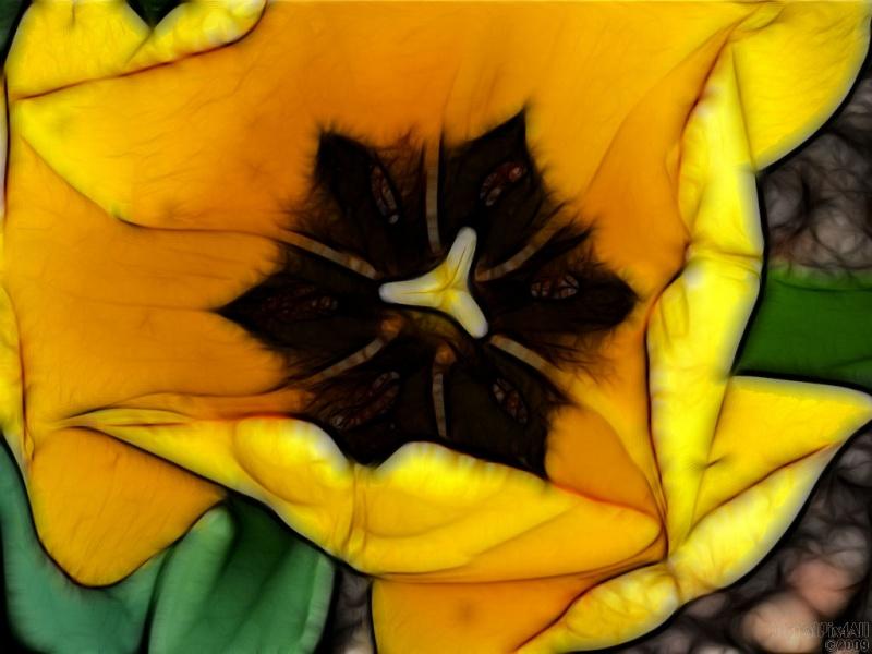Mod Tulip
