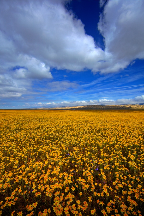 Carrizo Plains III