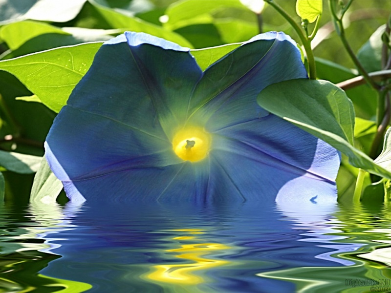 Water Glory