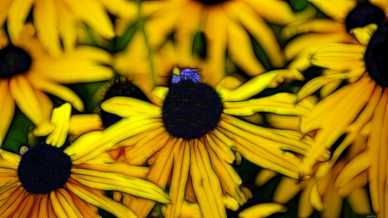Blue flies and Daisy´s