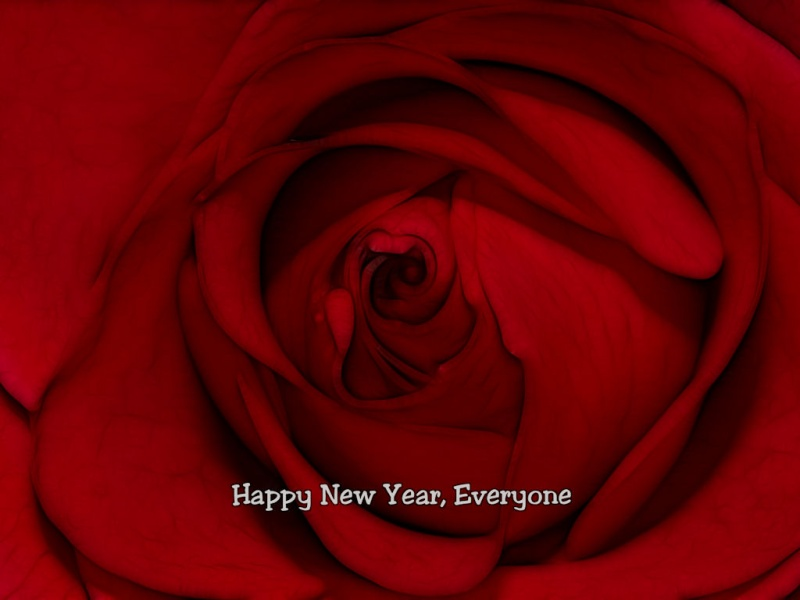 New Year Rose