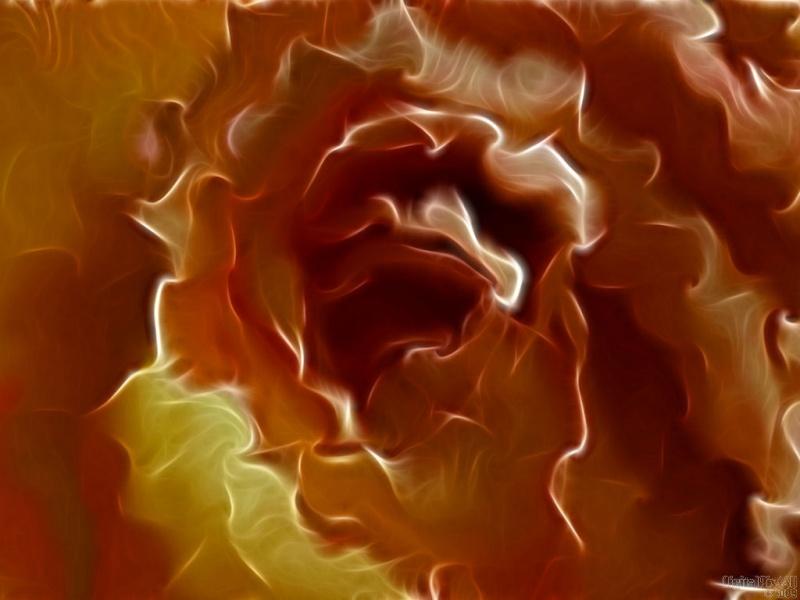 Wrinkle Rose