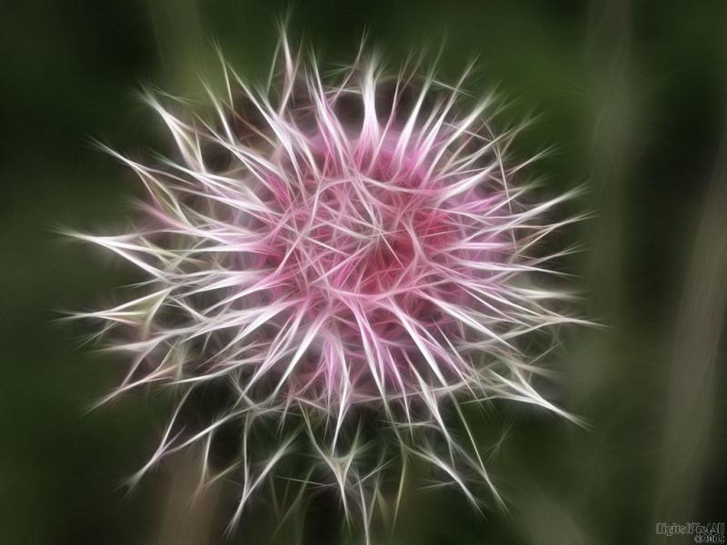 Weed Bloom