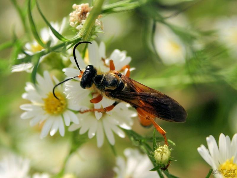 Big Wasp