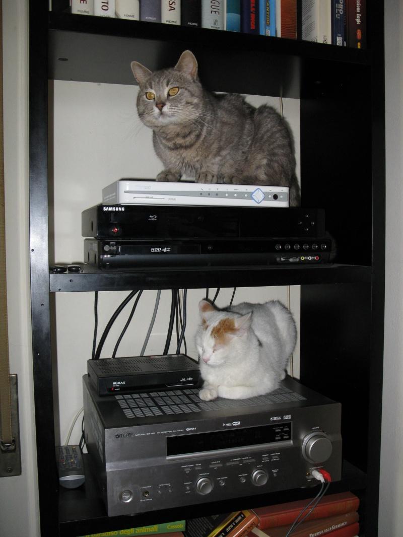 Hi - Fi  cats