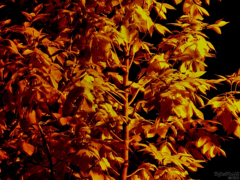 Fall Night Tree