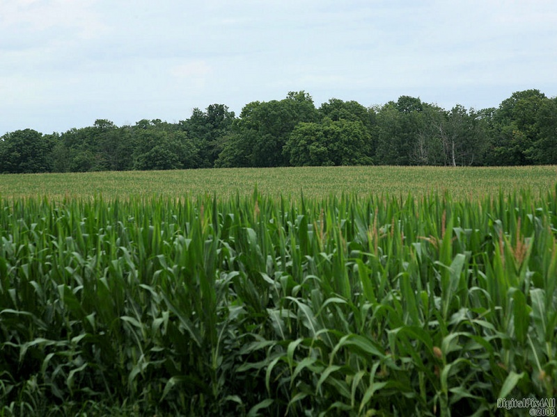 Corny View