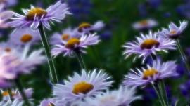 Pinwheels in Nature
