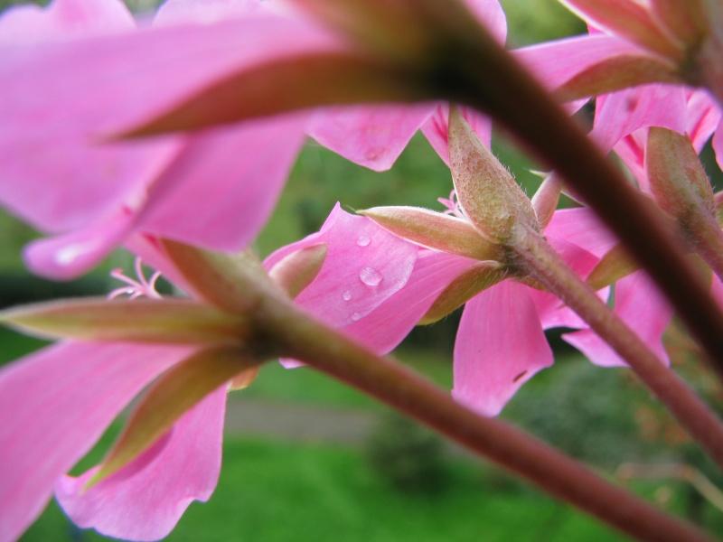 flower dew