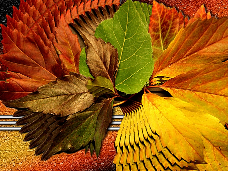 Autumn Spin