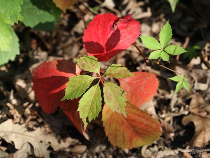 08-12-09 Leaves