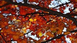 Autumns Orange