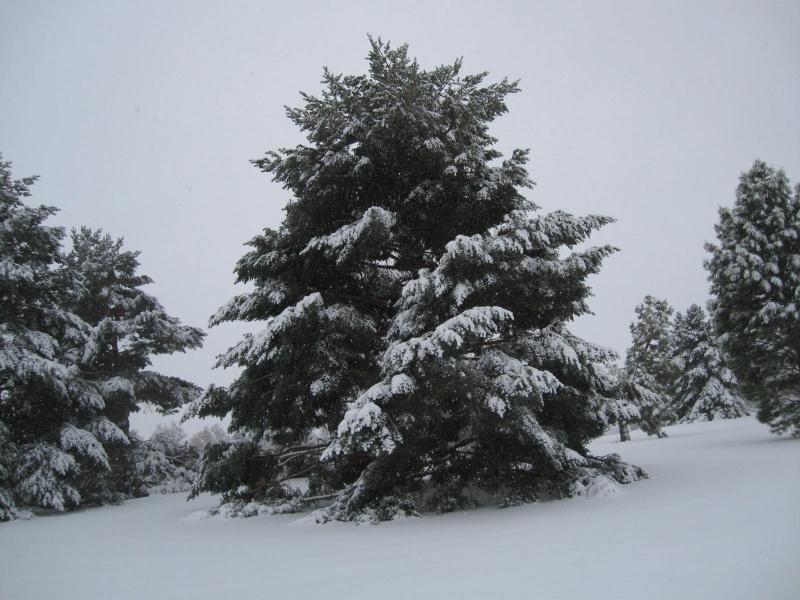 Denver snow 10-28-09