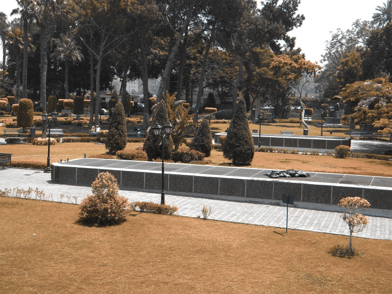 Sad Garden