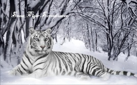 Snow Tiger Screensaver