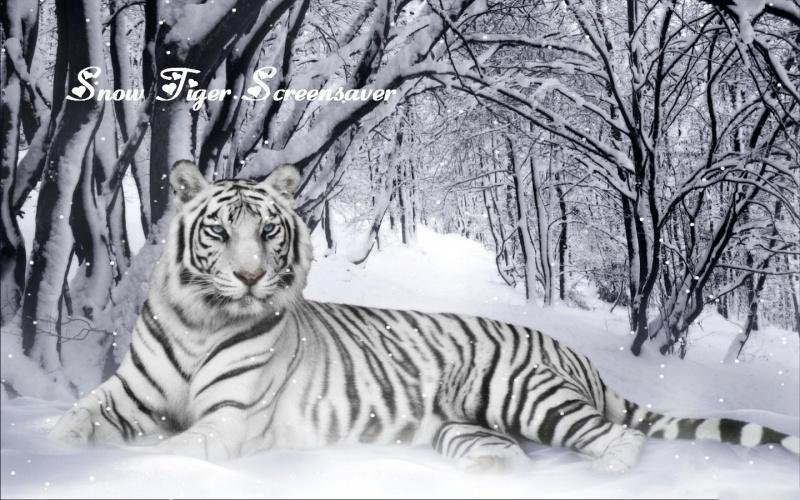 Snow Tiger Screensaver