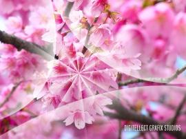 Flowers v1