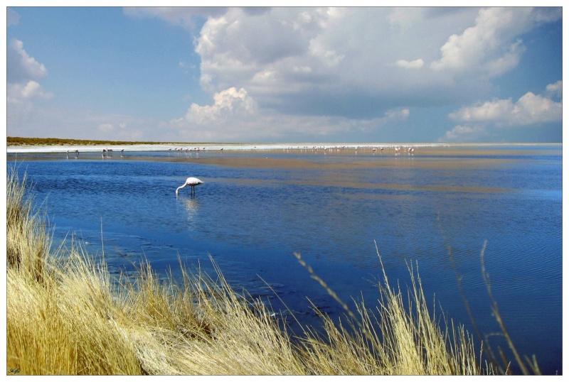 Pond 07