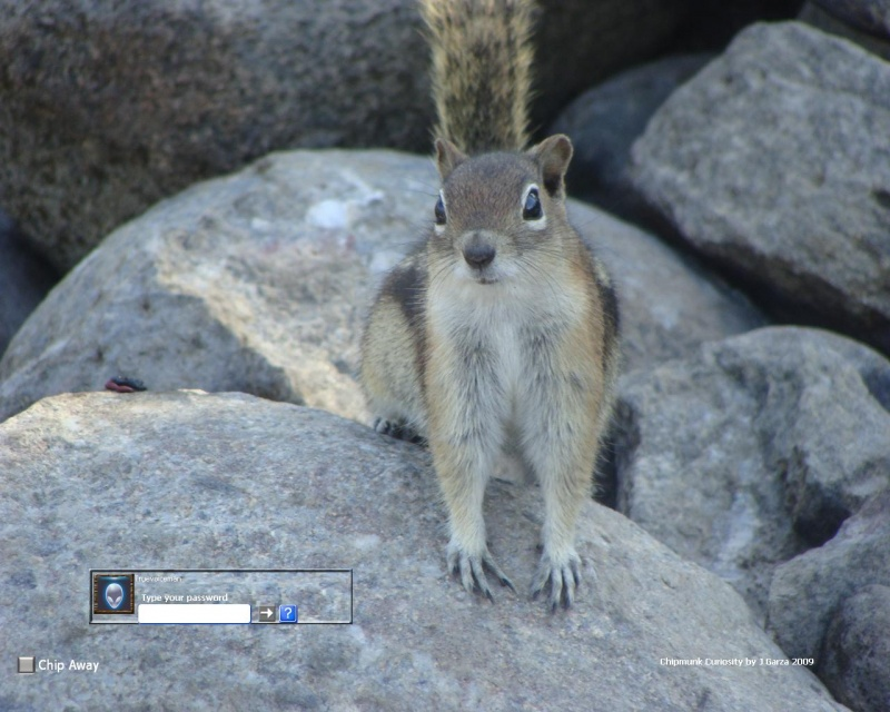 Chipmunk Curiosity