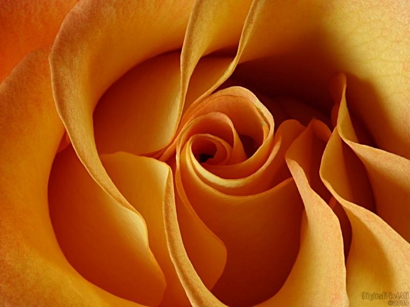 Inside Rosa