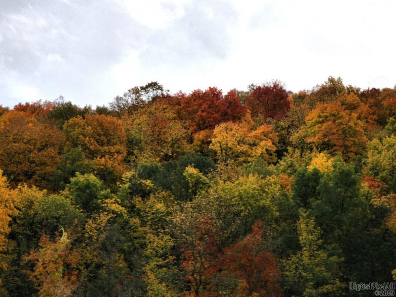 Remembering Fall_2