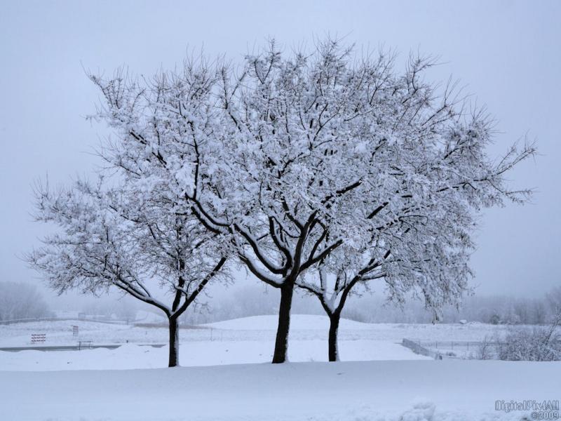 Frosty Splendor
