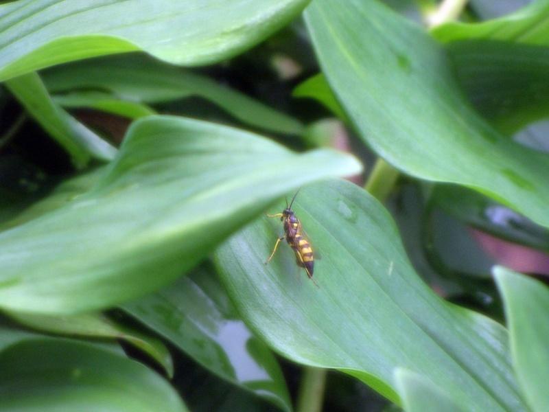 Screen Bug