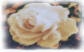 Water colour of White Rose
