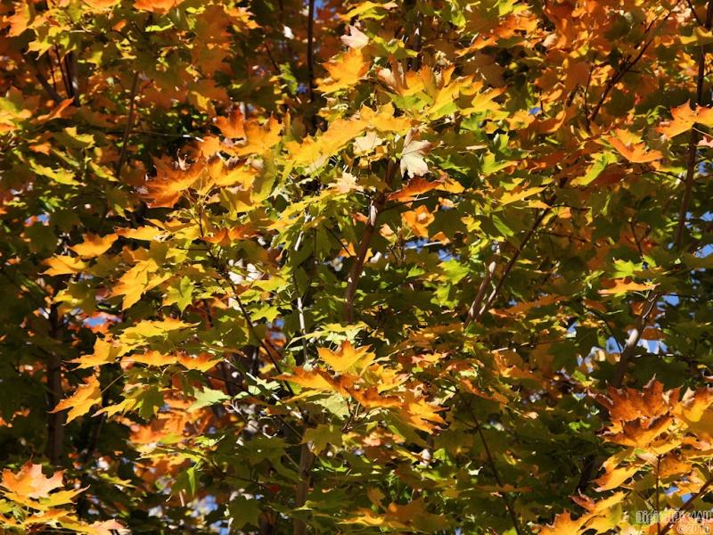 Leaf Hues