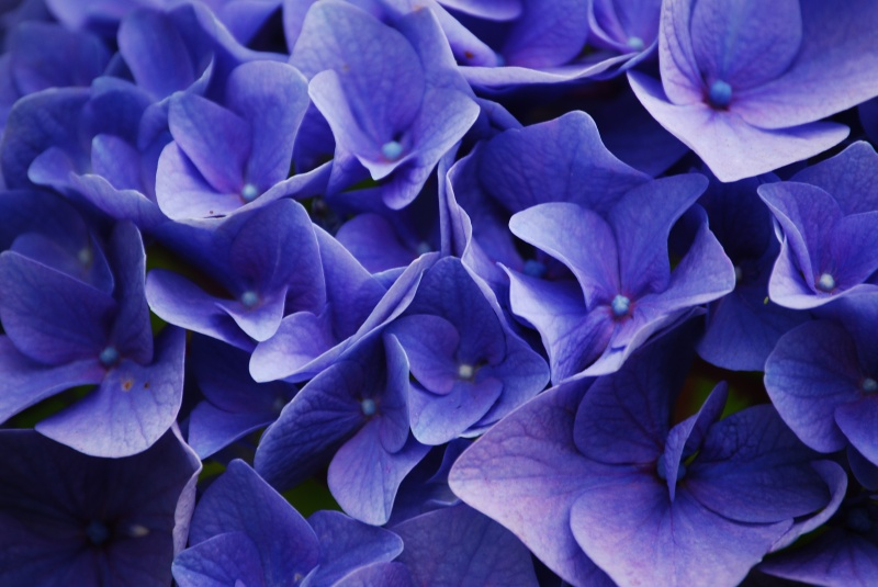 Blue Hue