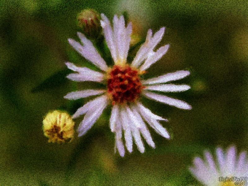 Seurat Flower