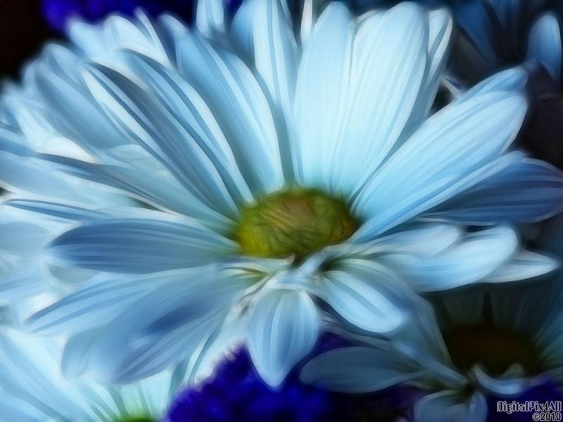 Blue Daiz