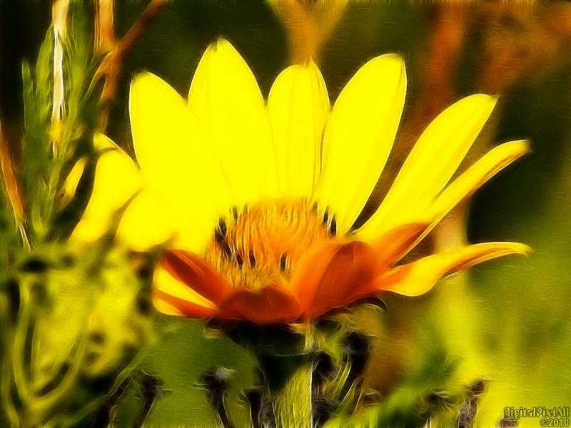Wild Yellow