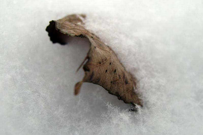 Snow Artifact