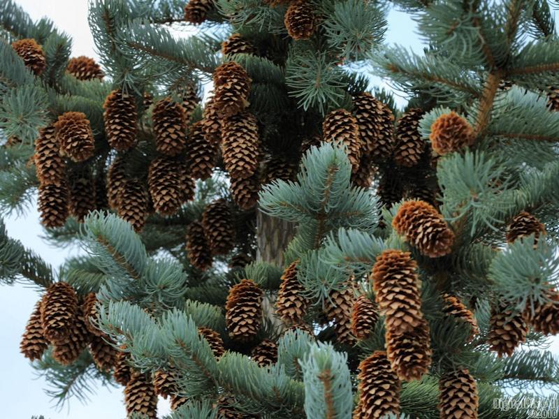 Many Cones