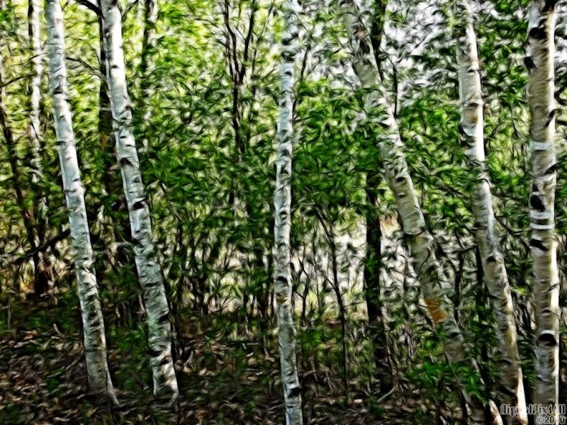 Treery
