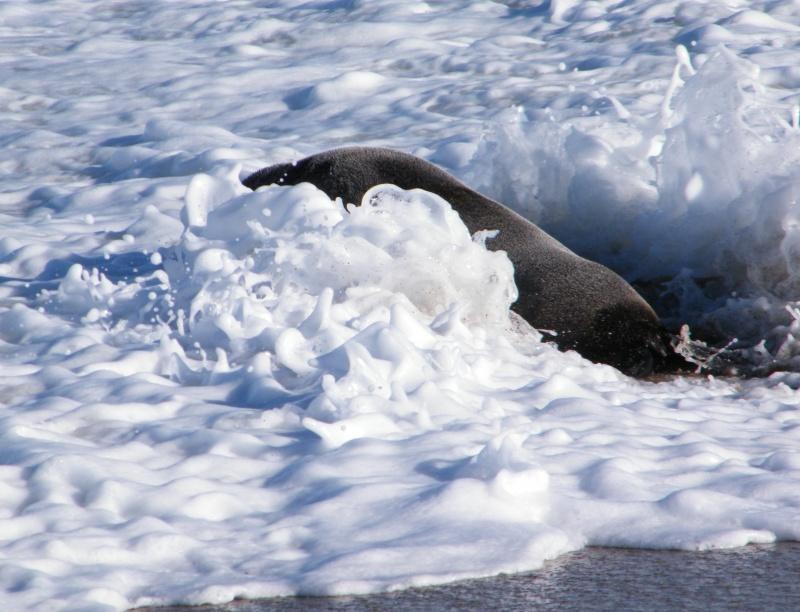 Seal ´n Surf