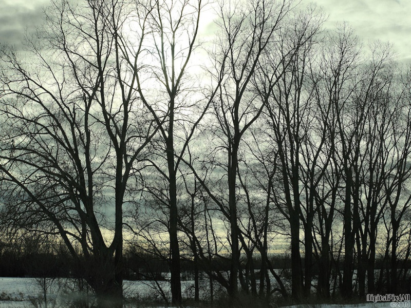 Treelhouettes