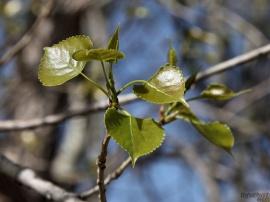 Spring Soon