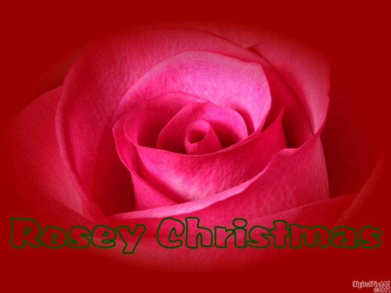 Rosey Christmas