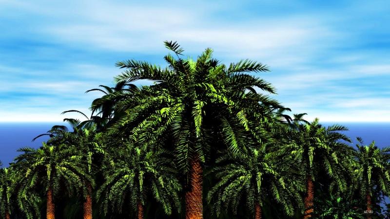 Palm Island Logon
