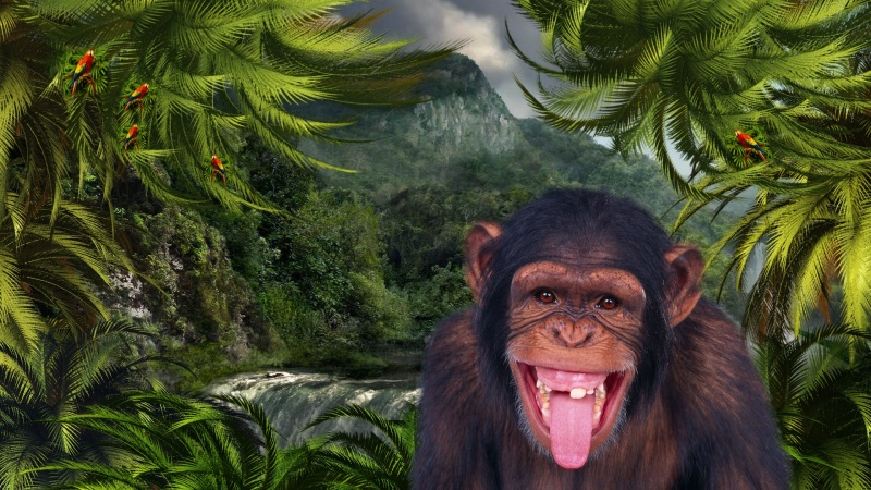 Jungle Monkey Logon