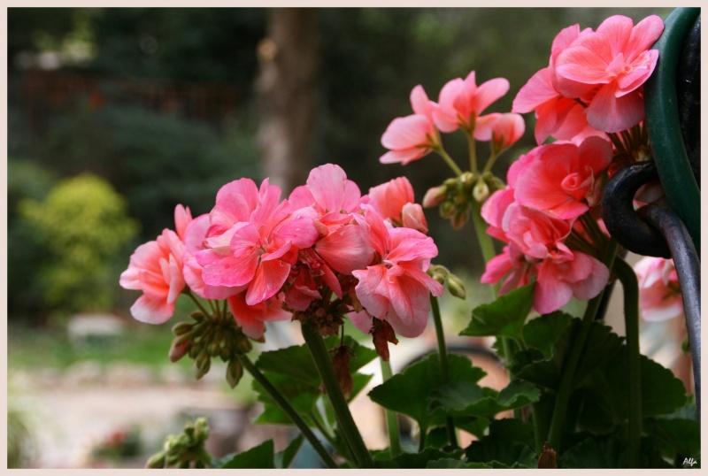 My garden 01