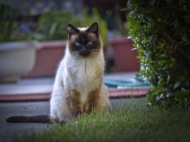 Neighbors Kitty